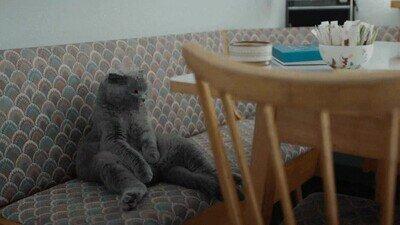 Enlace a Este gato me representa un domingo por la mañana