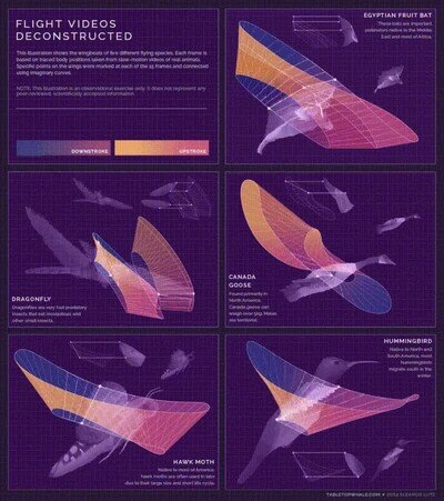 Enlace a 5 patrones de vuelo de animales distintos