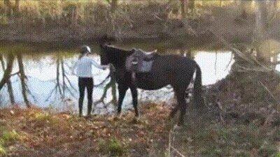 Enlace a Un caballo se niega a probar el agua por primera vez