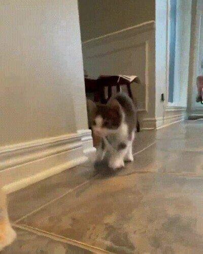 Enlace a Un simpático gato imitando a un conejo