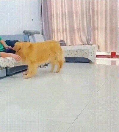 Enlace a Algo me dice que el perro grande tiene celos