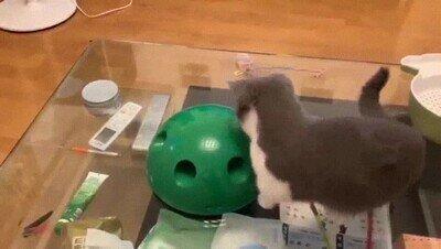 Enlace a Un juguete que encanta a todos los gatos