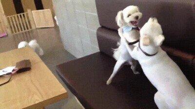 Enlace a Un perro que pone fin a la discusión
