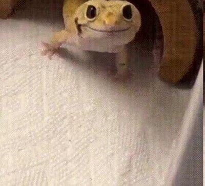 Enlace a Nunca en la vida habías visto una lagartija tan contenta