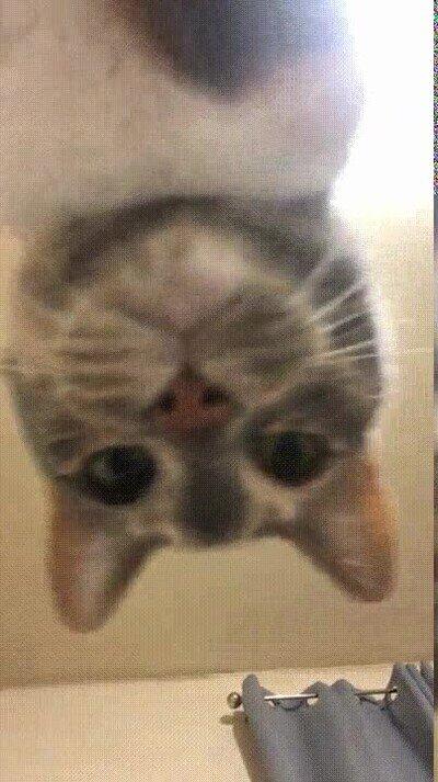Enlace a Si fueran gigantes los gatos darían mal rollo