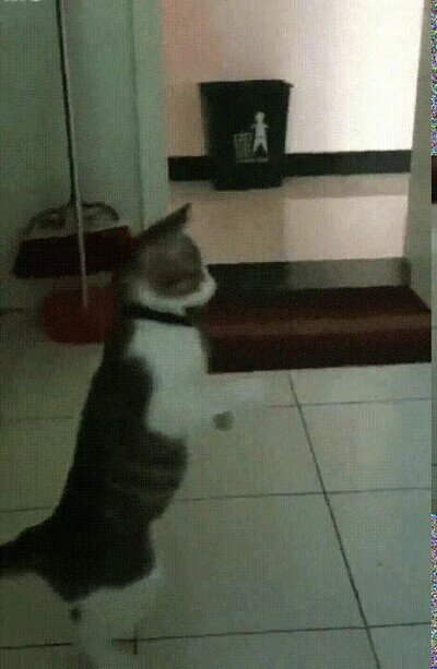 Enlace a Un gato que se queda alucinado al verse en el espejo