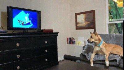 Enlace a ¿Estoy saliendo en la tele?