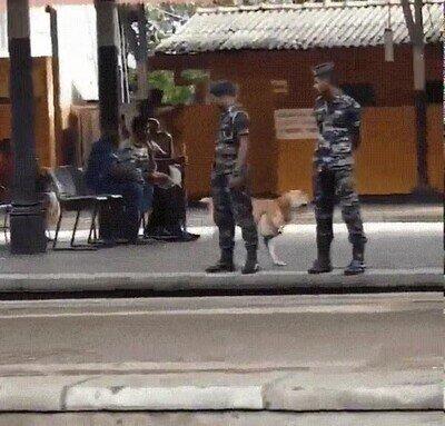 Enlace a Los perros de la policía también quieren jugar de vez en cuando