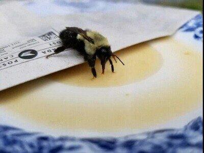 Enlace a No sabía que las abejas tenían la lengua tan larga