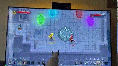 Enlace a Gatos que también quieren jugar a videouegos