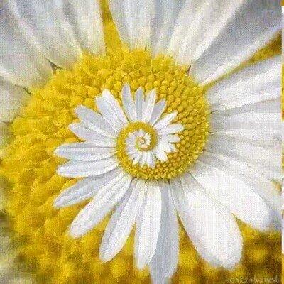 Enlace a La serie de Fibonacci en la naturaleza