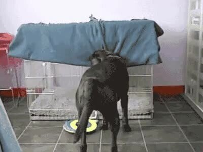 Enlace a Un perro que ha encontrado la técnica infalible para dormir de forma cómoda