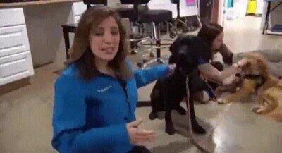 Enlace a A los perros también les pasa