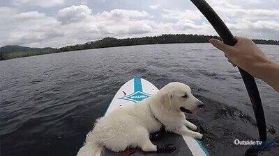 Enlace a De las cosas más relajantes que puedes hacer en compañía de tu perro