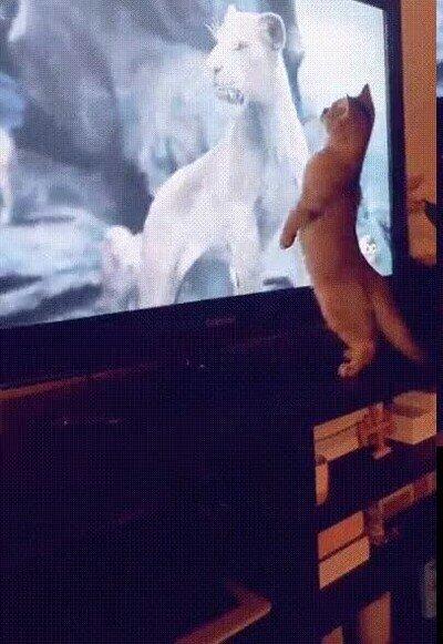 Enlace a La reacción del gato cuando aparece en pantalla el Rey de la selva
