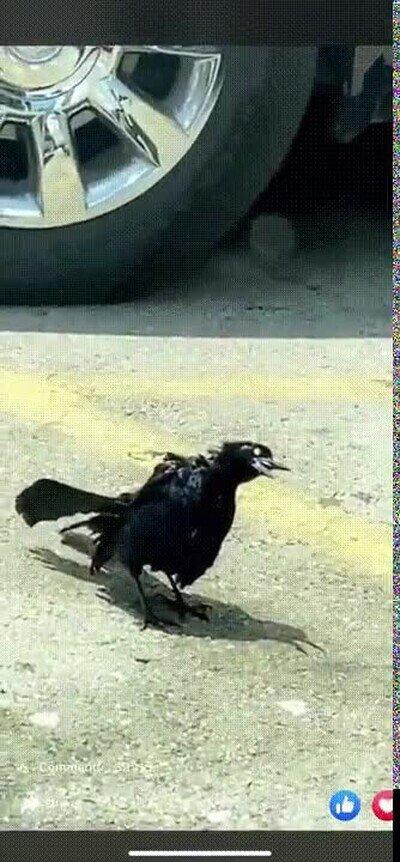 Enlace a Pájaros zombies