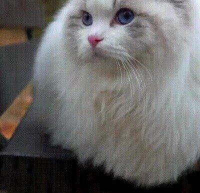 Enlace a El gato más adorable que verás hoy