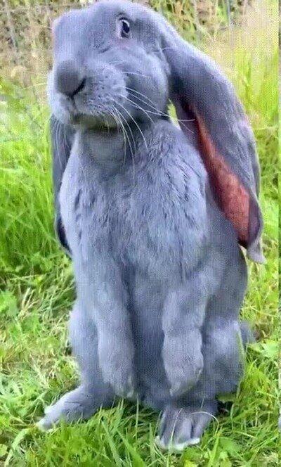 Enlace a Este conejo parece salido de un cuento de Disney