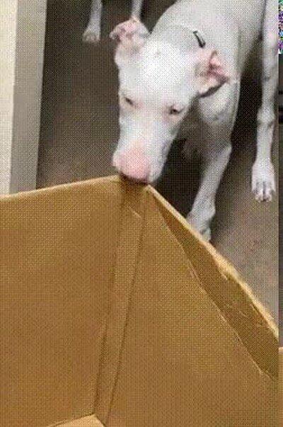 Enlace a ¿Me estás diciendo que tenemos uan caja entera para nosotros?