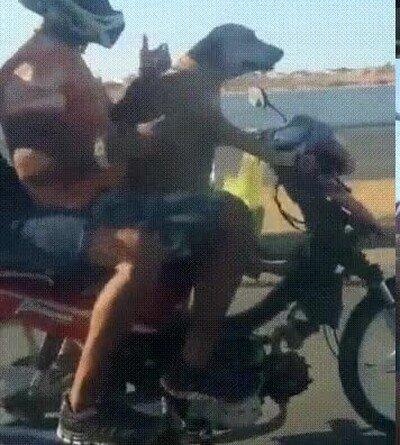 Enlace a Perros que han aprendido a conducir