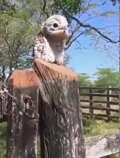 Enlace a Un pájaro que en realidad parece un Pokémon