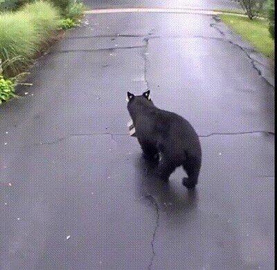 Enlace a Su pedido ha sido entregado a un oso