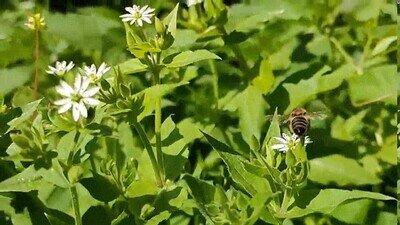 Enlace a Una abeja haciendo acrobacias en el aire
