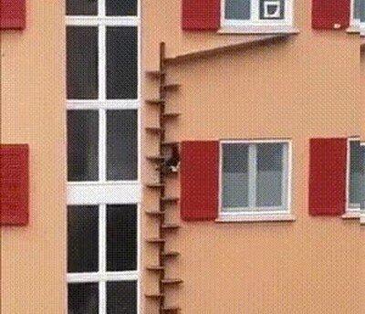 Enlace a Una escalera para ayudar que el gato vuelva a casa