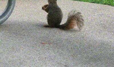 Enlace a A esta ardilla le encanta escuchar el saxo