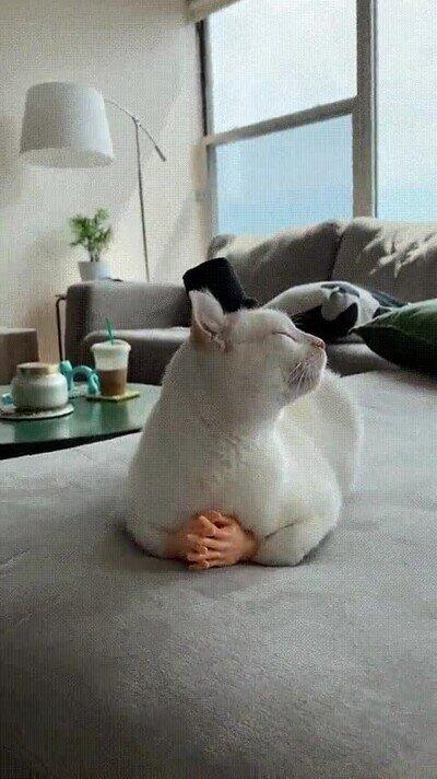 Enlace a El gato más elegante que has visto