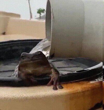 Enlace a Una rana dándose un baño relajante