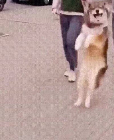 Enlace a Perros que han aprendido a andar sobre dos patas