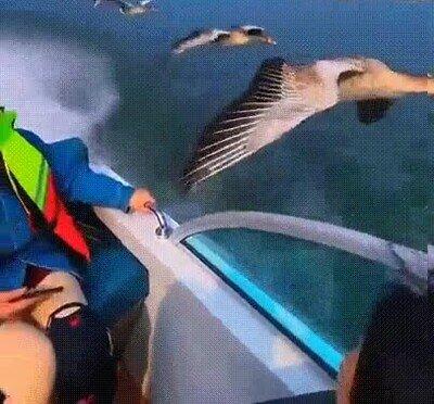 Unos patos que no tienen miedo a acercarse a los humanos
