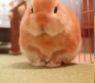Enlace a El conejo más adorable que verás en todo el día