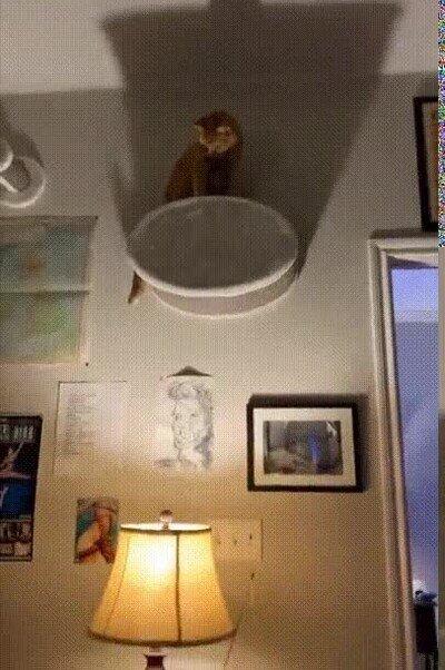 Enlace a Mi gato es el señor de la noche