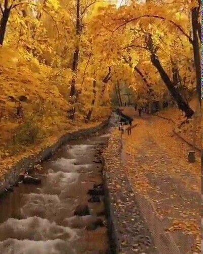 Enlace a El otoño nos deja imágenes preciosas