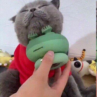 Enlace a A los gatos también les encantan los mimos