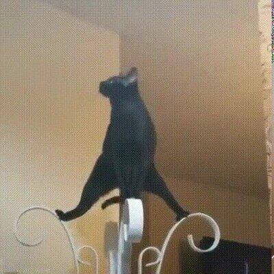 Enlace a Un gato haciendo yoga
