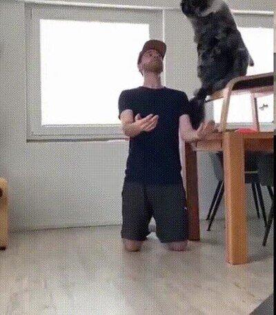 Enlace a Un perro dando un salto de fe