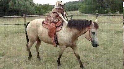 Enlace a Nunca había visto a un perro montando a caballo
