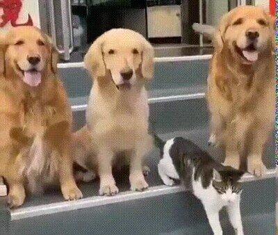 Cuando te haces una foto de grupo con gente que te cae mal