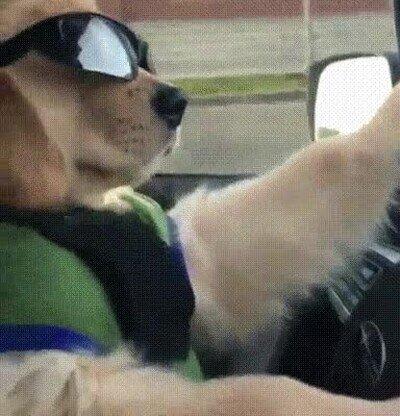 Enlace a El perro más molón que verás nunca