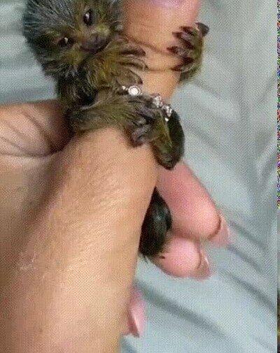 Enlace a Un mini chewbacca en tu mano