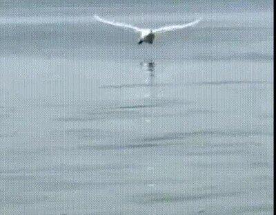 Enlace a Un aterrizaje espectacular