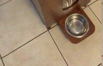 Enlace a Un dispensador de comida para tu mascota