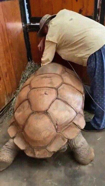 Enlace a Su mejor amiga es una tortuga que tiene 200 años