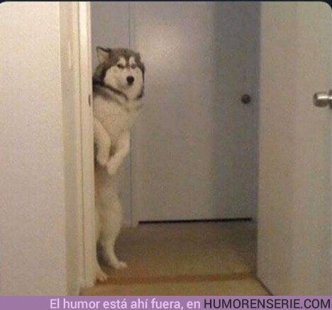 35756 - Fantasma cuando Jon esté montando a Rhaegal