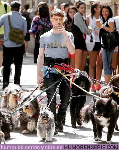 38875 - Nunca son suficientes perros para Harry Potter