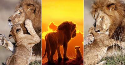 39423 - GALERÍA: Estas tiernas fotografías te recordarán la relación entre Simba y Mufasa