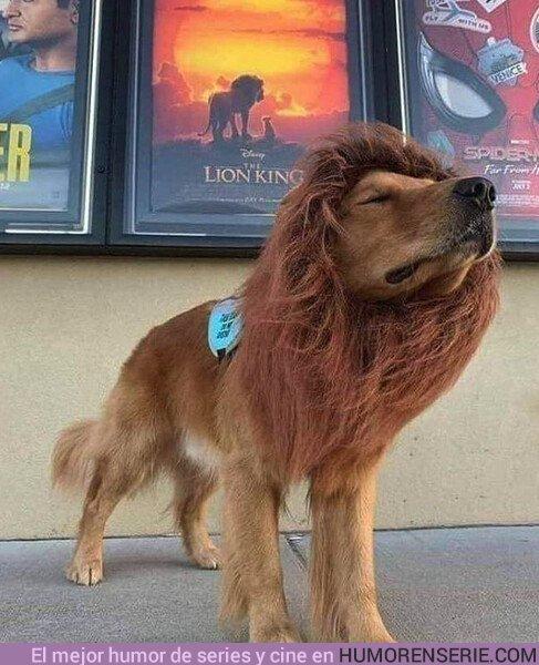 41378 - Mi perro está distinto desde que vio El Rey León